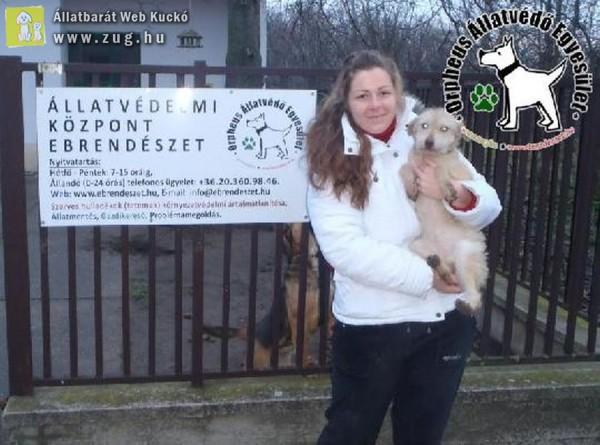 Állatmentés: Dorka szerető Gazdinál!