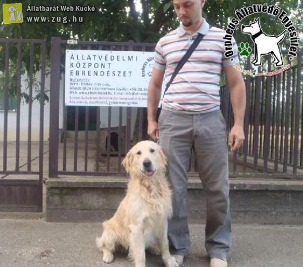 Állatmentés: Gabe Gazdihoz került!