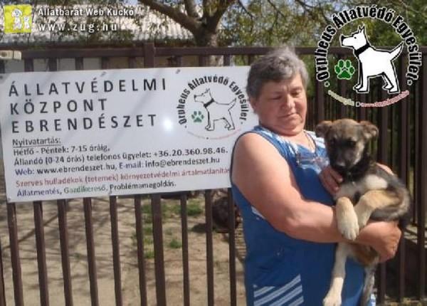 Állatmentés: Titi Gazdihoz került!