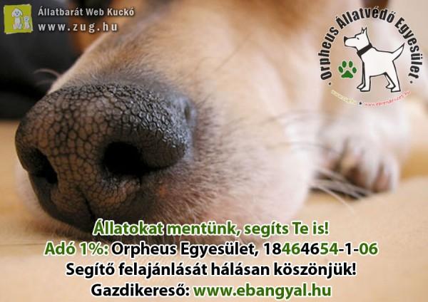 Állatmentés, állatvédelem