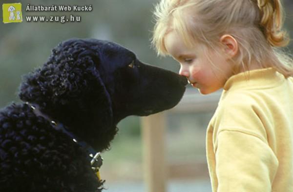 Állatszeretet, állatbarátság