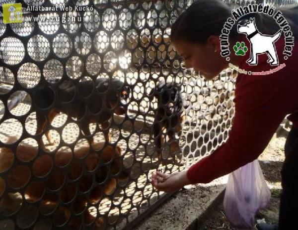Állatvédelmi ismeretek átadása