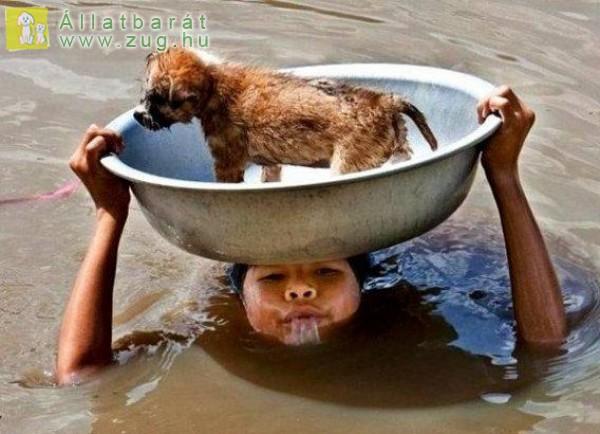 Állatvédő, lavórban a mentett kutya
