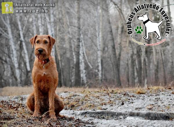 Az erdőben vadat űző kutya törvényesen - szabadon kilőhető! Vigyázz!