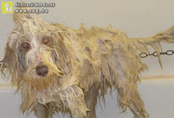 Bolhás kutyára: fürdetés és bolhaírtás