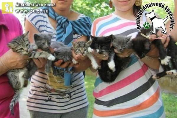 Cicamentés: Szerető Gazdihoz kerültek a cicák!