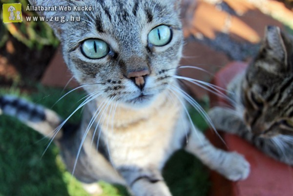Cicamentés, megmentett macskák