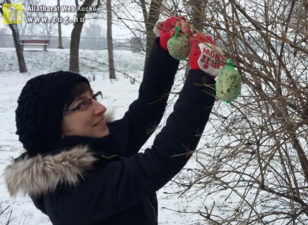 Cinkegombócok a fán, madáretetés