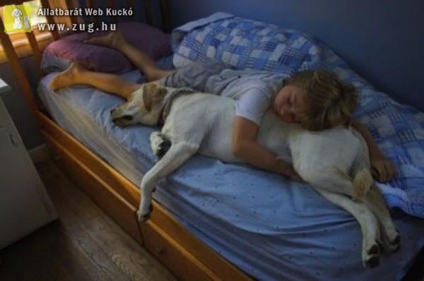Felmehet a kutya az ágyra vagy nem?!