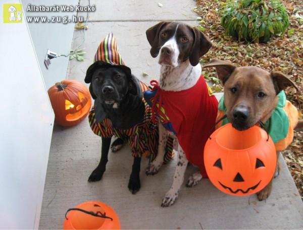 Halloween Kutyusok