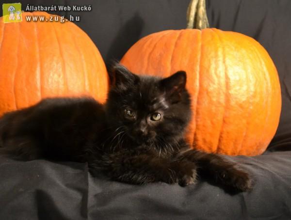 Halottak napi fekete macskás babona - hülyeség!