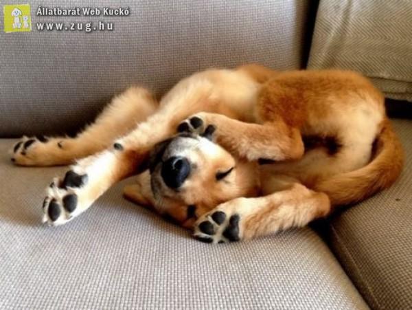 Hány lábú kutyus?!