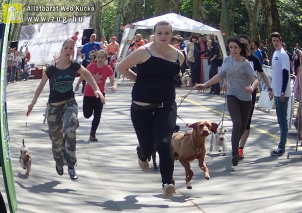 IV kutyafuttában napon - kutyás futás