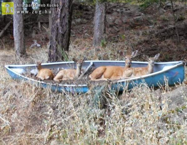 Jó az erdei pihenés!