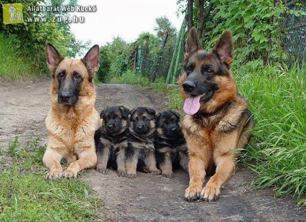 K9-es family