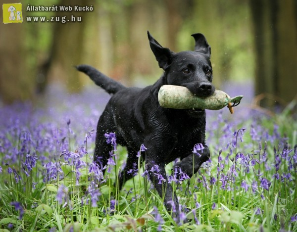Kirándulás az erdőben - a kutya is szereti!