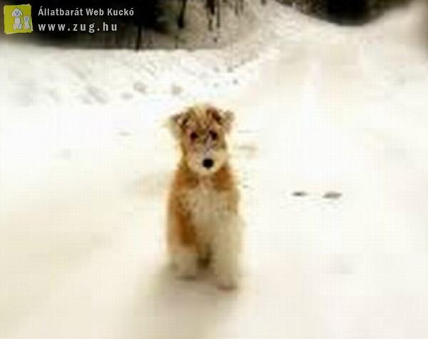 Kutya hideg - Orpheus Állatvédő Egyesület