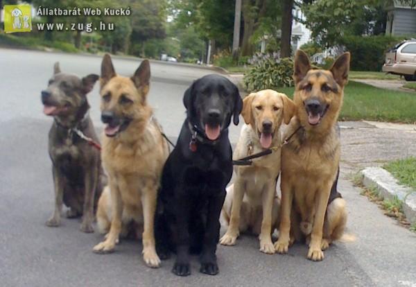 Kutyafalka, kutyabarát utcában