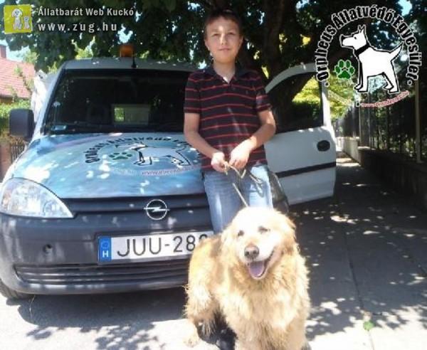 Kutyamentés: Fürkész Gazdihoz került!