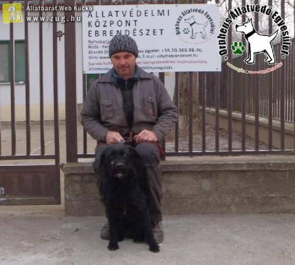 Kutyamentés: Gazdihoz került Balma!