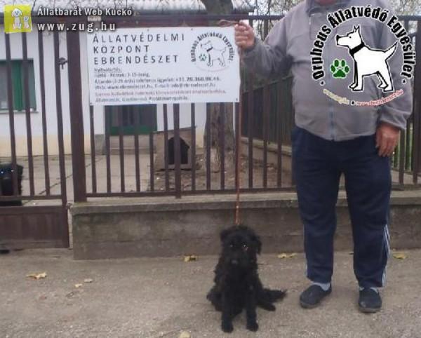 Kutyamentés: Gazdihoz került Kertes!