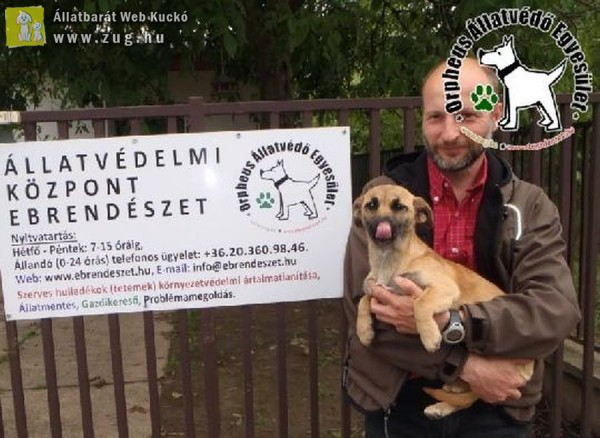 Kutyamentés: Szerető Gazdinál Tücsi!