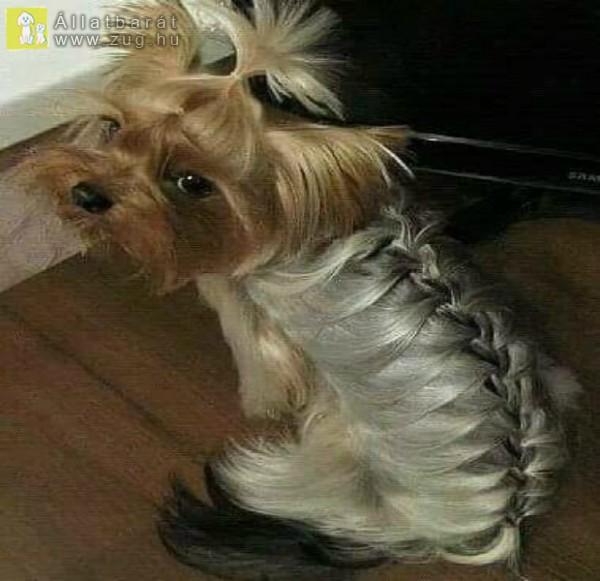 Kutyaszőr fonás :)
