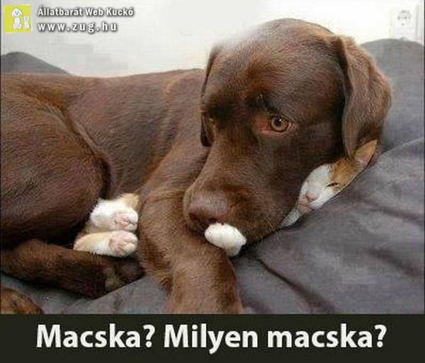 Macska? Milyen macska?!