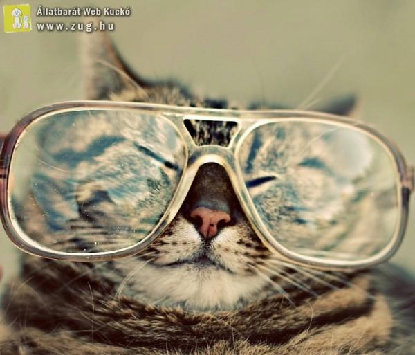 Macska-értelmiségi