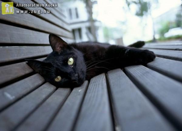 Macska szieszta!