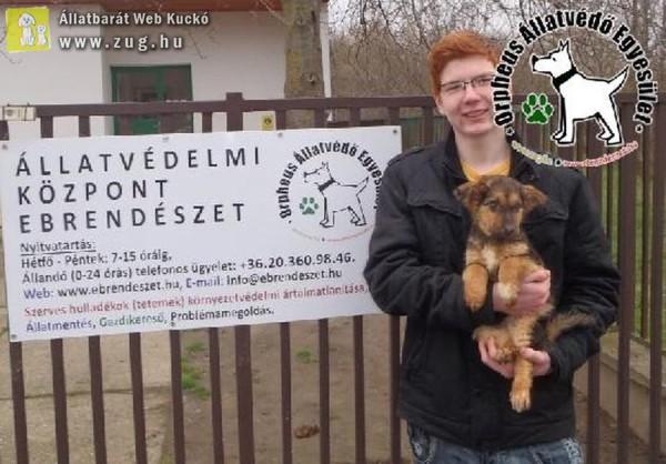 Puppy Gazdihoz került!