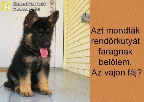 Rendőr kutya növendék