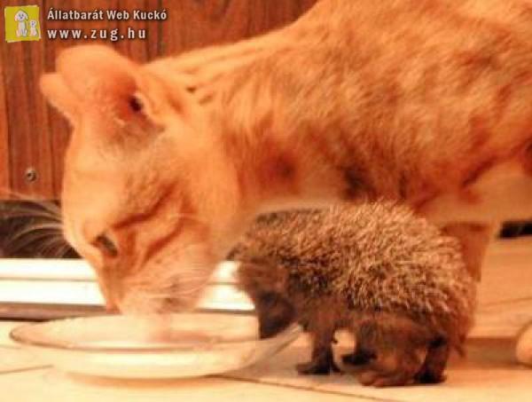 Süni és cicc a két jó barát
