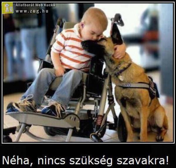 Szavak nélkül - állatszeretet :)