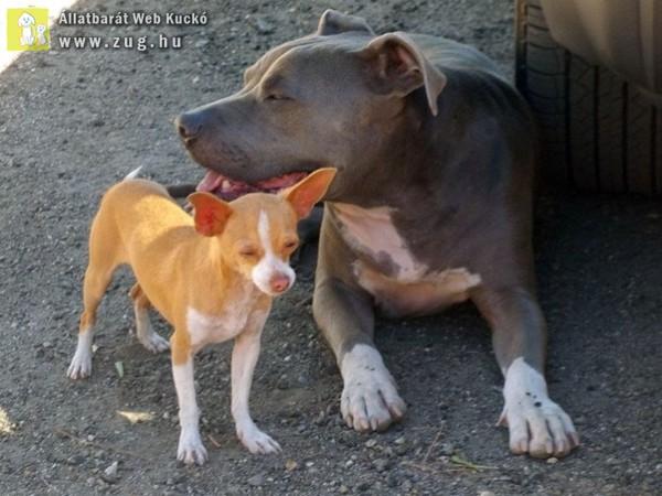 Szocializált és kiegyensúlyozott viselkedésű kutyákkal több az öröm