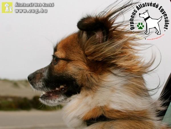 Tavaszi szél, kutya-kocsi