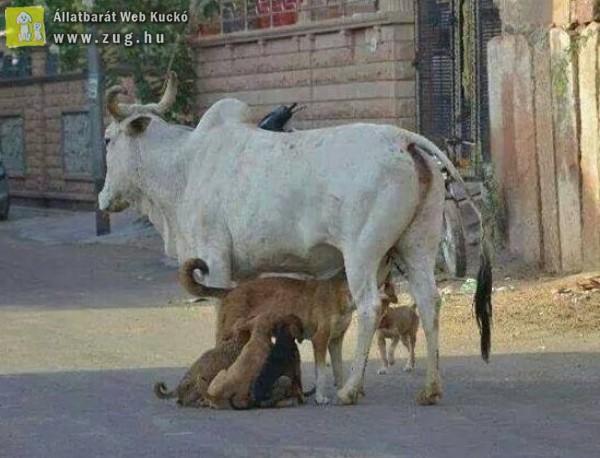 Valahol Indiában - az állatok piramisa