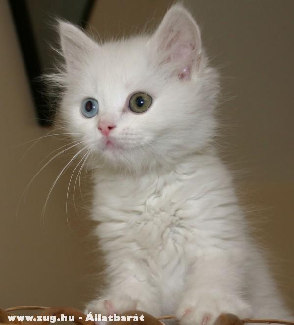 Cat - Cica - szeretem!