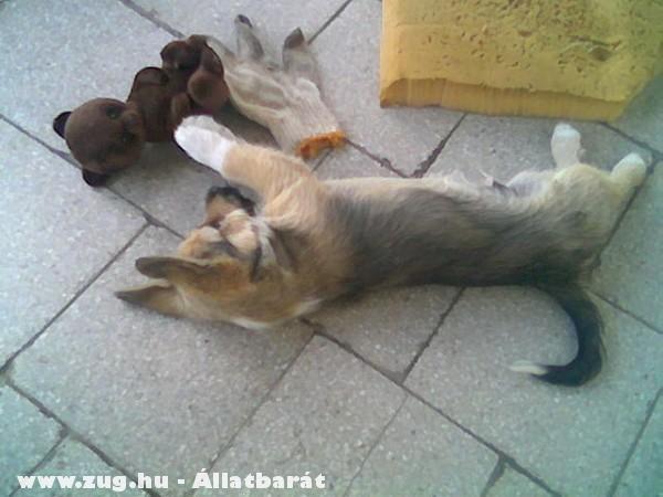 Született farkas...