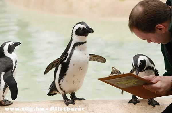 Állatkerti beosztás