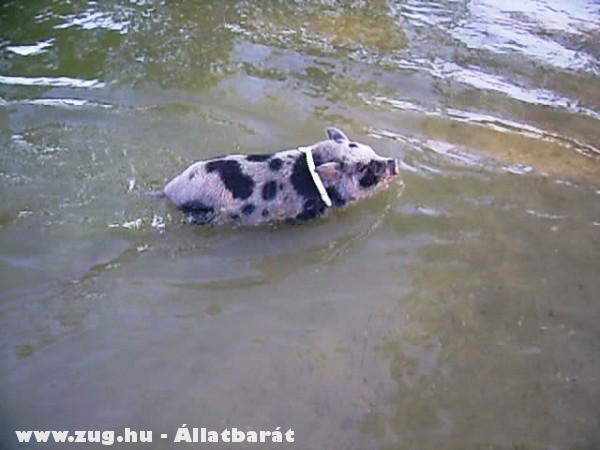 Egy kis úszás