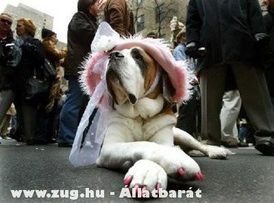 Kutya madam