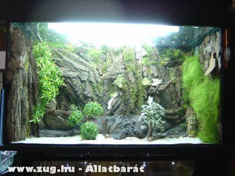 hangyavár