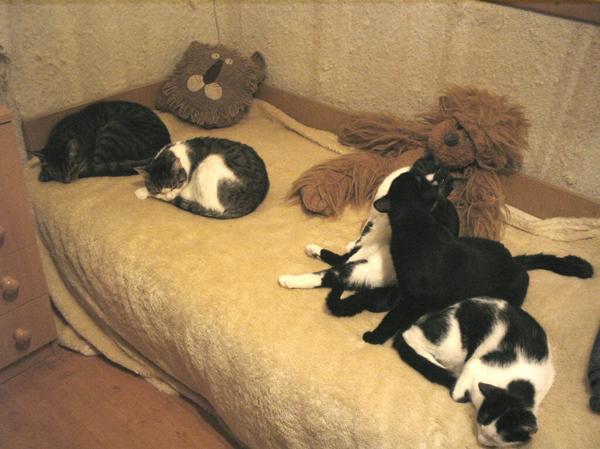 5 cica