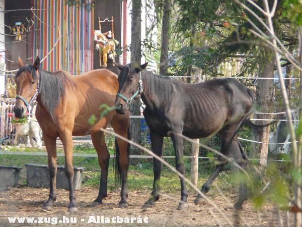Éhezõ lovak SEGÍTSETEK!