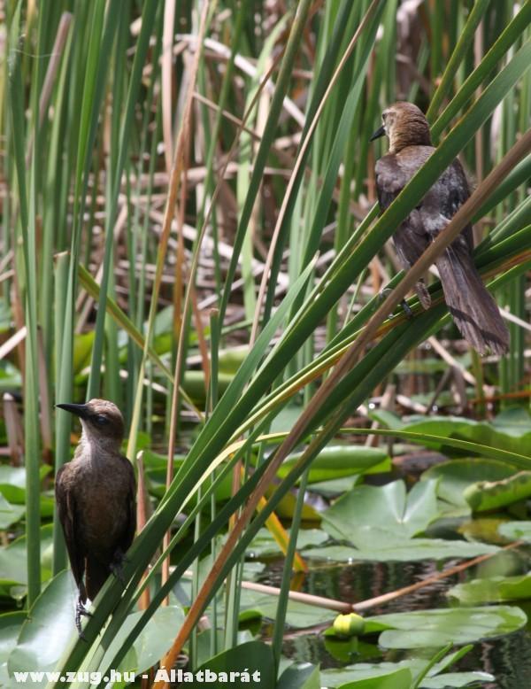 Madarak - Everglade mocsár Florida