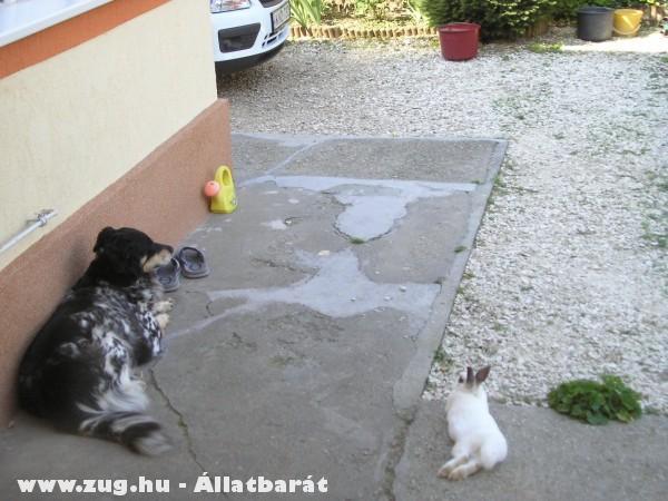 Barátok lettek...