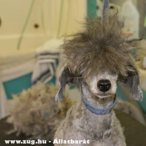Kutyakozmetikusnál