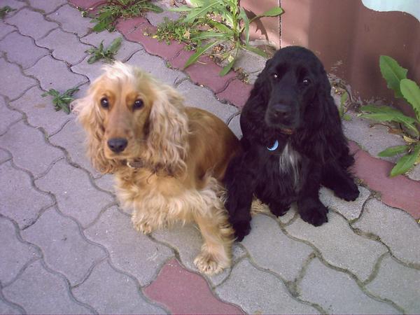 Molly&Bessy