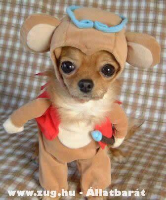 Kutyaruha vagy fordítva?!